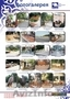 Ландшафтный дизайн-архитектура  - Изображение #2, Объявление #1580811
