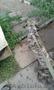 """Собака Тигра из приюта """"Хвостатый Рай"""" - Изображение #2, Объявление #1576208"""