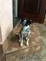 """Собачка Боня из приюта """"Хвостатый Рай"""" - Изображение #2, Объявление #1576215"""