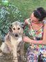 """Собака Анита из приюта """"Хвостатый Рай"""" - Изображение #2, Объявление #1576209"""