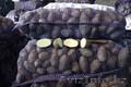 Картофель 5+ Оптом/помощь с доставкой - Изображение #3, Объявление #1580543
