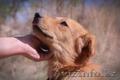 Собачка Люся из приюта Хвостатый Рай - Изображение #3, Объявление #1556867
