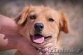 Собачка Люся из приюта Хвостатый Рай - Изображение #2, Объявление #1556867
