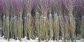 Фруктовые деревья Сербия - Изображение #2, Объявление #1597317