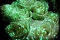 Флористическая краска (био-гель) для цветов светящаяся в темноте - Изображение #2, Объявление #1600590