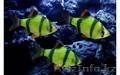 рыбки с доставкой по Алматы - Изображение #2, Объявление #1605319