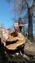 Спилим, обрежем деревья. Верхолаз (арборист) Евгений, спецтехника. - Изображение #4, Объявление #1337163