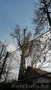Спилим, обрежем деревья. Верхолаз (арборист) Евгений, спецтехника. - Изображение #7, Объявление #1337163