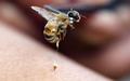 Лечение пчелами в Алматы