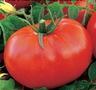 Продам рассаду томатов